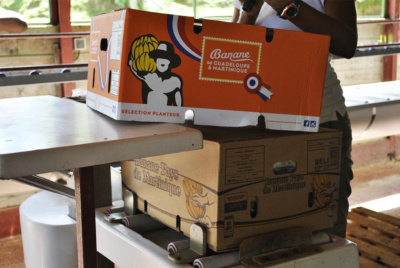 cartons-bananes.jpg